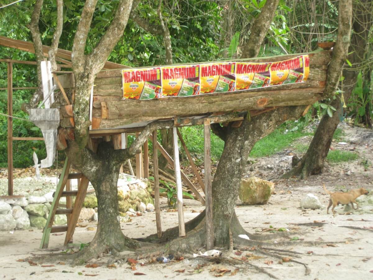Boat inna tree on Winnifred beach